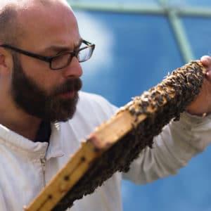 Eine Honigwabe