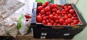 Tomaten vom Foodsharing_Foodsaving